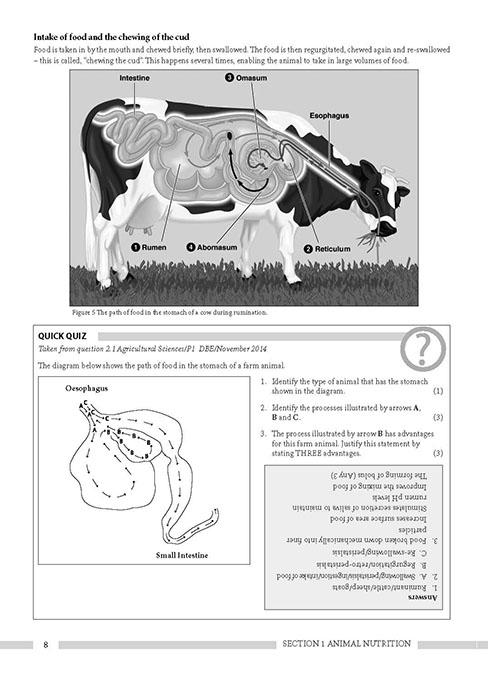 animal farm questions for matric exams 2013